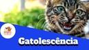 Gatolescência Como conviver com um gato adolescente