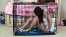Alisha Messing Diaper in Cage
