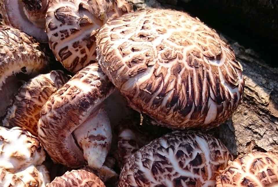 Статья - Какие грибы полезные?