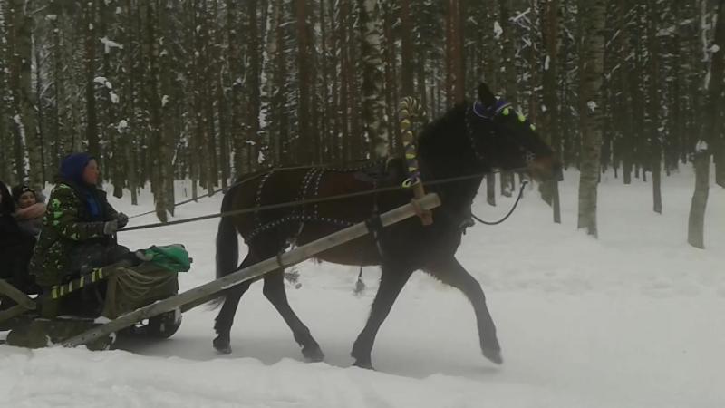 Лошадка мохноногая....