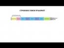Строение гена. Решение генетических задач - 3