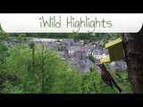 iWild North Wales Highlights