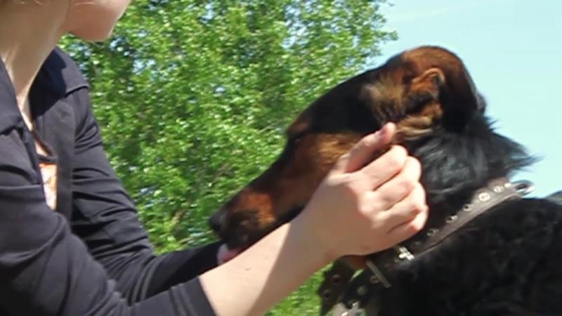 Собака Яшма ищет дом! Информация в комментариях! Петербург