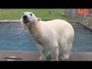 Дружба человека и белого медведя
