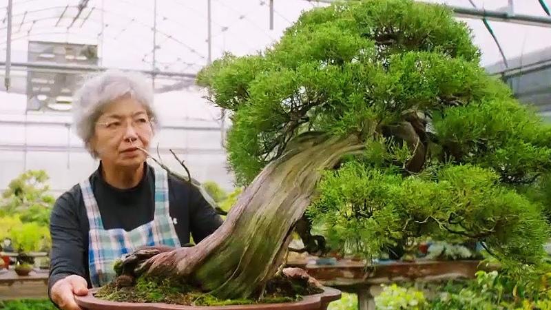 Bonsai: the Endless Ritual   Extraordinary Rituals   Earth Unplugged