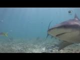 Акулы из другого мира лучшее