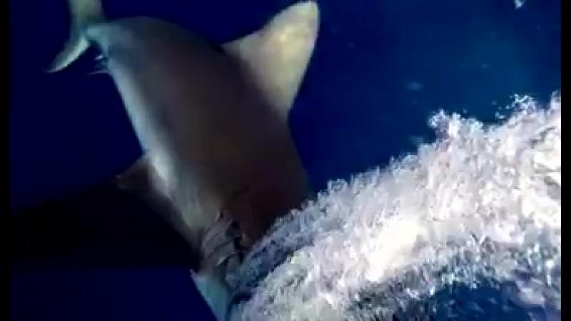 Мужик плавал с аквалангом и напоролся на акул - пришлось отбиваться практически голыми руками. Эпик видео  прислал V l a d V l a