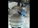 Замена внешнего пыльника ШРУС гранаты ВАЗ 1111 1113 ОКА