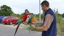 Cherry a flight macaw blue and gold macaw with Green w Bílá Voda Chodov