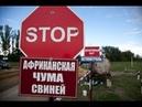 Африканская чума свиней в Тверской области Июль 2018 г