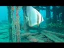 Wreck Дайвинг у острова Маврикий к затонувшим кораблям Le Victoria Centre De