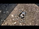 Как паук-птицеед сбрасывает старую кожу