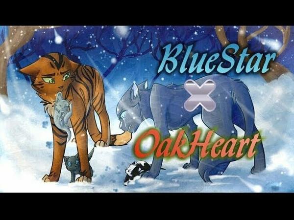 Bluestar x Oakheart - King and Lionheart