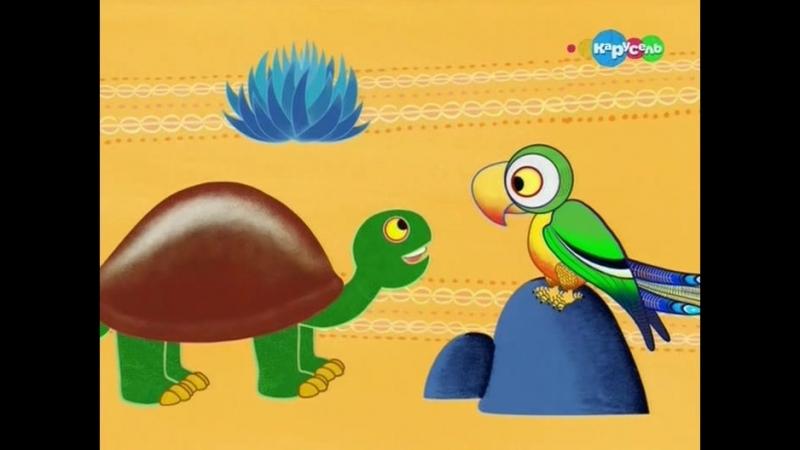 04.Почему у черепахи панцирь в трещинах