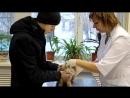 Пищевая аллергия у кошек и собак. Советы ветеринара