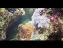 Дом моря в Вене Рыбы тоже любят тыкву