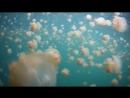 Озеро медуз Джеллифиш