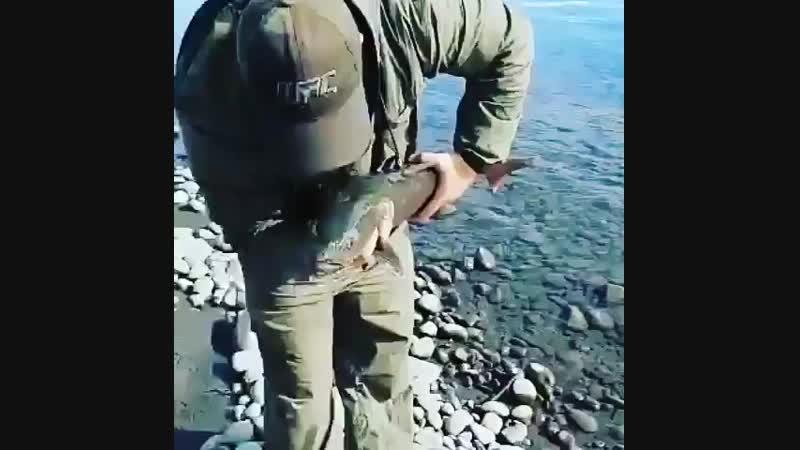 Уважение такому рыбаку