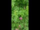 вот такая красота цветёт в Воркуте