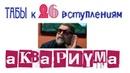 АКВАРИУМ ТАБЫ К 26 ВСТУПЛЕНИЯМ ПЕСЕН ГРЕБЕНЩИКОВА!