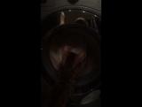 Трикси и стиральная машинка