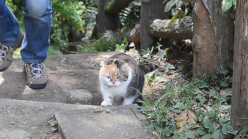 毎週山を登る猫のチャミ、海と富士山を背景にパシャリ SNSで話38988