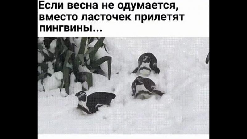весна-пингвины
