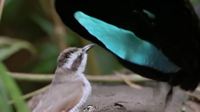 Birds Party ) · coub, коуб