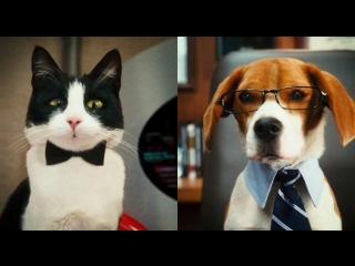 Кошки против собак: Месть Китти Галор / Cats & Dogs: The Revenge of Kitty Galore (2010) BDRip 720p [vk.com/Feokino]