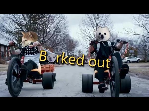 Twenty one Doggos - Borked out