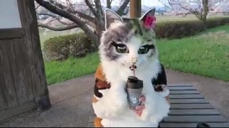 「みーこ」とお花見に行った時の動画をもう1つ。「お食事編です」。桜を見ながら美味しいものをいただく。最高だにゃ😸 塩パン🥖 → にゃんコーヒー → にゃんてのレモンシフォンケーキ の順にいただきます