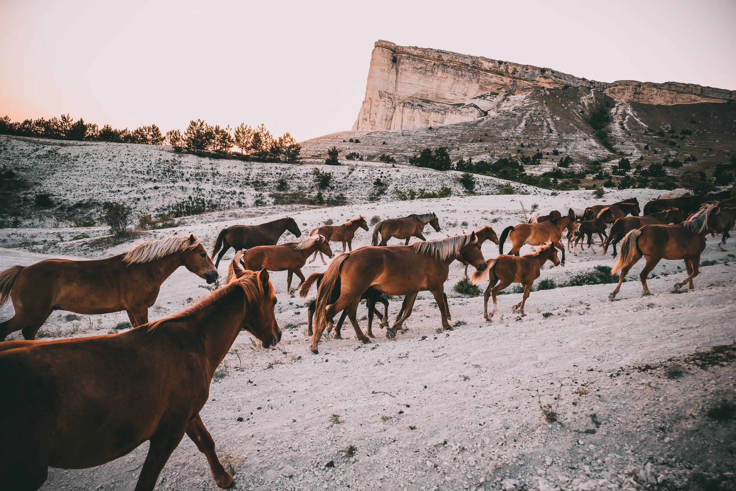 конные прогулки в Крыму, клуб