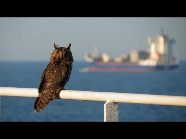 Bird Migration on Merchant Ships