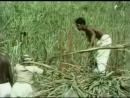 О жесткой сельскохозяйственной эксплуатации человека человеком