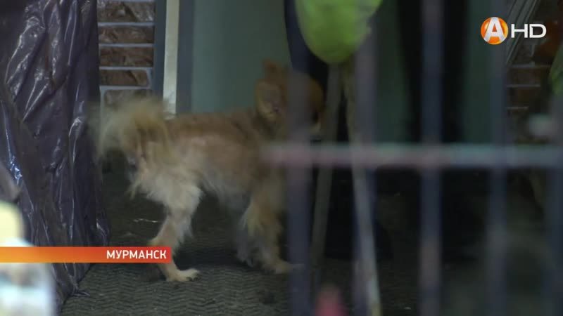 Собачий «Освенцим» - 86 породистых собак освободили из заточения