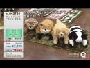 The Japanese earthquake information on the QVC Japan channel