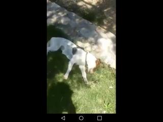 While in Greece...wonder if @MatthewDaddario goes around the world looking for puppies to care.... @Eskim089 - - SaveShadowhunte