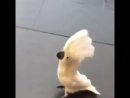 Попугай сторож 😆