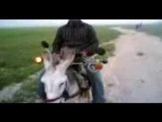 Тюнингованный ишак :D ( vk.com/kavkaz_best )