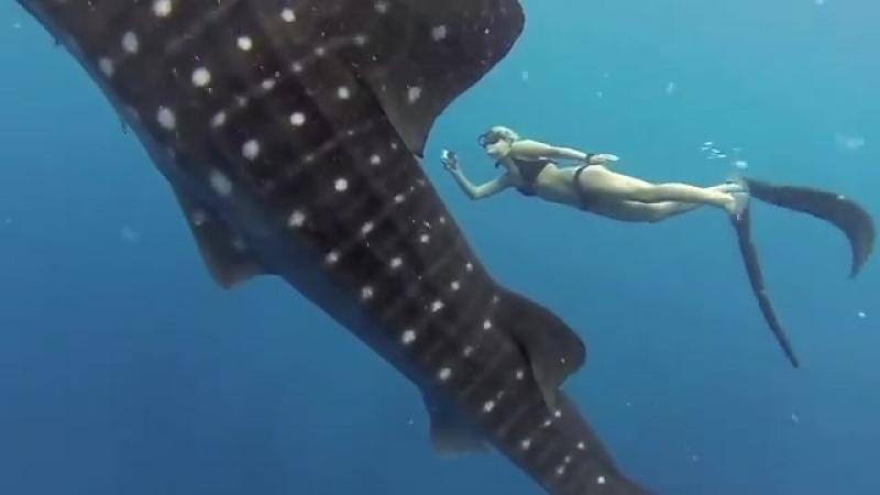 Девушка с китовой акулой!!