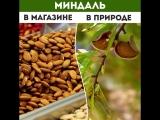Как выглядели продукты до того, как их собрали