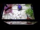 AquaEl ME органайзер черный - мини аквариум