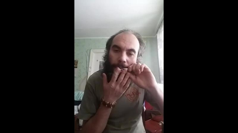 ХОМУС ХРИСТОФОРОВА (ЗВУК ТАЙГА)