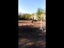 Дочурка катается на лошадке