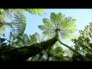 11 BBC Как Вырастить Планету Серия 1 Жизнь Из Света