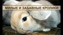 Декоративные кролики милые и забавные домашние животные
