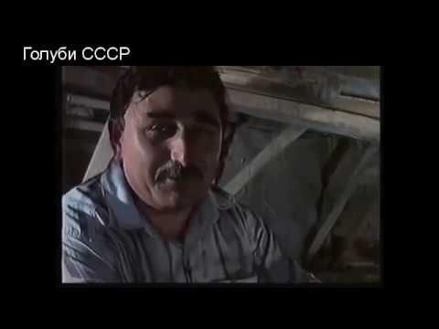 Голуби СССР Советские голуби и голубеводы.