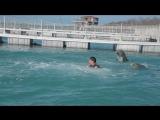 Плавание с Дельфинами 2018