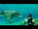 Дельфин и дайвер