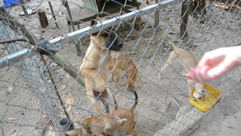 Фукуокская порода собачек с риджем:)